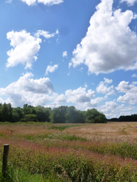 Meadow Cloud