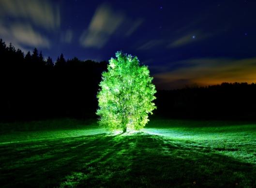 glowing_tree-wallpaper-3200x24001